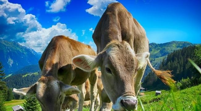 Geri Ödemesiz Hayvancılık Kredisi