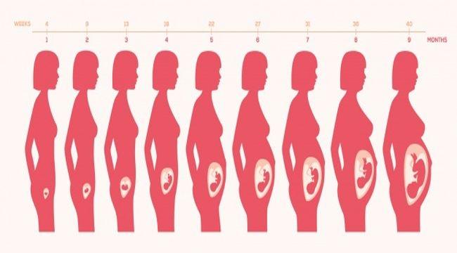 Hamileliğin İlk Üç Ayında (Birinci Trimester) Anne Adaylarını Neler Bekler?