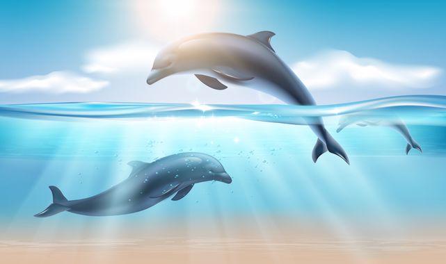 Rüyada Yunus Balığı Görmek Ne Anlama Gelir