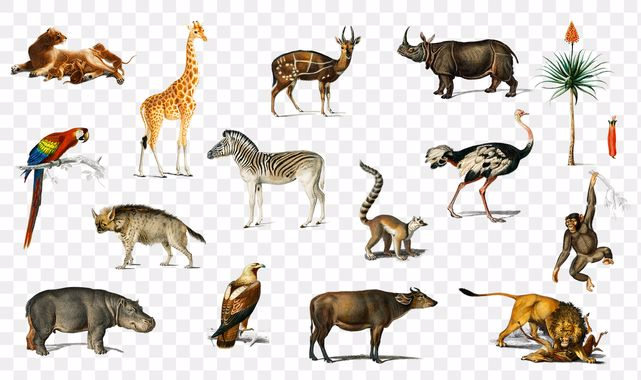 Hayvan Bilmeceleri ve Cevapları