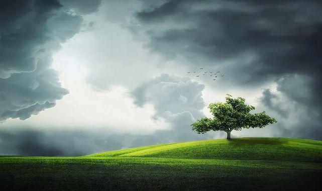 Rüyada Çimen Görmek Ne Anlama Gelir